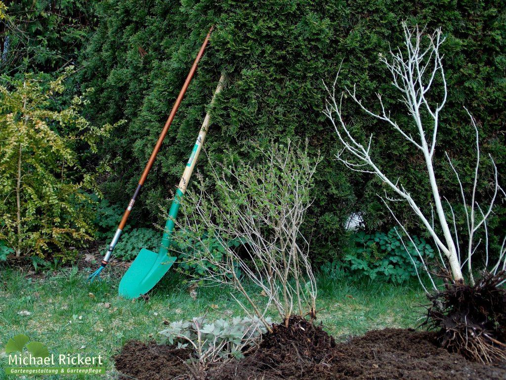 Gärtnermeister Gartenpflege Gartengestaltung Michael Rickert - Ihr Gärtner für Bad Sassendorf und Umgebung. Rasenpflege Baumpflege Zierpflanzen Gartenbau Gartengeräte