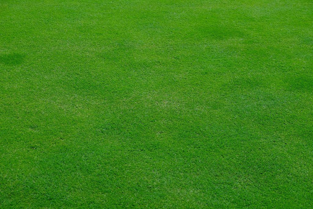 Rasen Gartengestaltung Gartenpflege Michael Rickert Gärtnermeister Rasensamen Saatgut Rollrasen Raseneinsaat Rasenfläche Rasen mähen Rasenpflege Gras