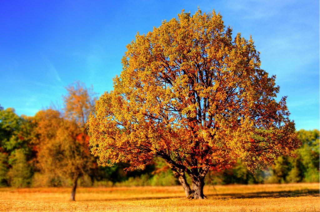 Gartengestaltung Natur Gärtnermeister Michael Rickert Gartenpflege Baumpflege baumschnitt